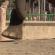 A HTC Desire EYE azt is túléli, ha egy elefánt tapossa el