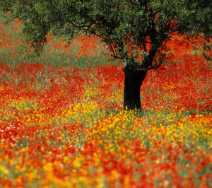 flowers_forever_hd1080p-300x266